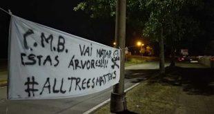Grupo de cidadãos vai manifestar-se em silêncio contra o abate de árvores em Braga