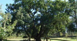Estudo da Universidade do Minho aborda desequilíbrios da valorização florestal em Portugal