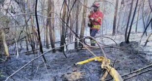 Bombeiros controlam incêndio na União de Freguesias de Arentim e Cunha