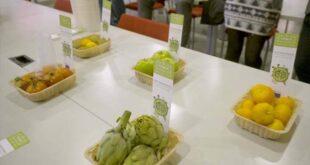 Universidade do Minho cria embalagens biodegradáveis à base de desperdícios alimentares
