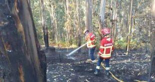 Dominado incêndio que deflagrou em Aveleda