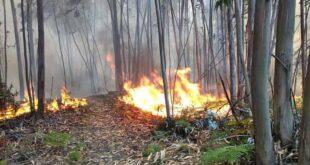 Braga. Incêndio em Pedralva mobiliza 34 bombeiros e 2 meios aéreos.