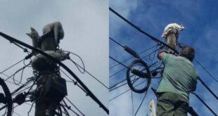AGERE resgata gatos em poste de eletricidade em Braga