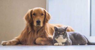 Fafe avança com apoios para esterilização de animais de companhia