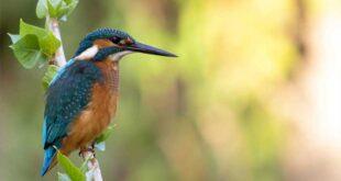 Fotógrafo capta imagens incríveis da fauna de Braga