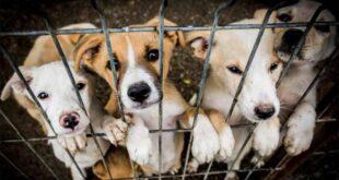 PAN propõe reforço das verbas do OE para centros de recolha oficial de animais