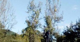 Proteção Civil destruiu 151 ninhos de vespa asiática em Cabeceiras de Basto