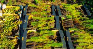 Esposende recebe mais 2.000 árvores autóctones para reflorestação