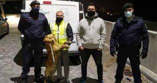 Cão é resgatado pela GNR após cair de 3 metros de altura em Famalicão