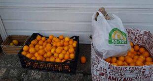 Braga: Morador de Celeirós oferece fruta para evitar desperdício